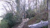 oakham-tree-surgery-01.jpg