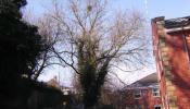 oakham-tree-surgery-09.jpg