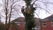 oakham-tree-surgery-10.jpg