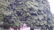oakham-tree-surgery-15.jpg