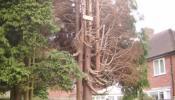 oakham-tree-surgery-16.jpg